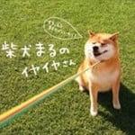 ミサコ・ロックスが語る ニューヨークで柴犬が大人気な理由