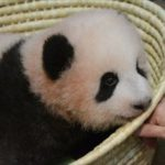 安住紳一郎 上野赤ちゃんパンダ「シャンシャン」命名予想を当てる
