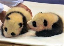 安住紳一郎 和歌山双子の赤ちゃんパンダ名前予想と結果を語る