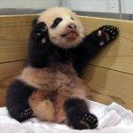 安住紳一郎 和歌山赤ちゃんパンダの名前 命名塾を語る