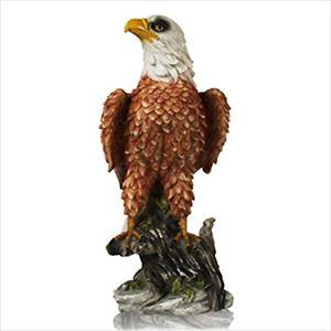 井上陽水 タモリから聞いた鷹がすごい話を語る
