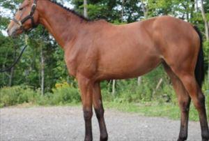 プチ鹿島 カーリング女子人気の高まりと競走馬「ソダネー」登場を語る