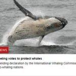 モーリー・ロバートソン 国際社会の反捕鯨運動と日本を語る