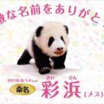 安住紳一郎と中澤有美子 和歌山パンダ「彩浜」命名予想の結果を語る