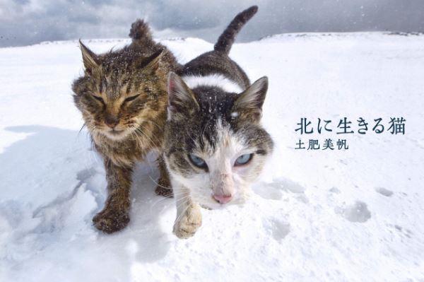 安住紳一郎 極寒の北海道の野良猫を語る