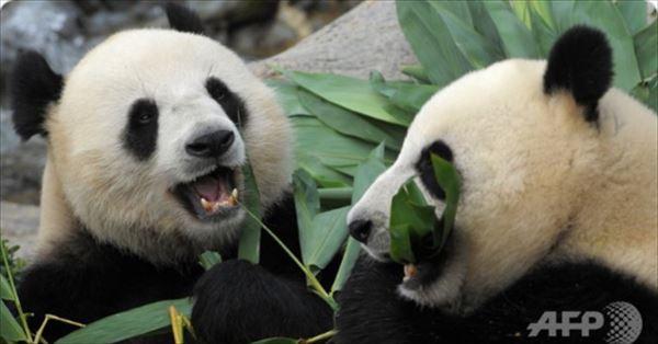 安住紳一郎 新型コロナウイルスがパンダに与えた影響を語る