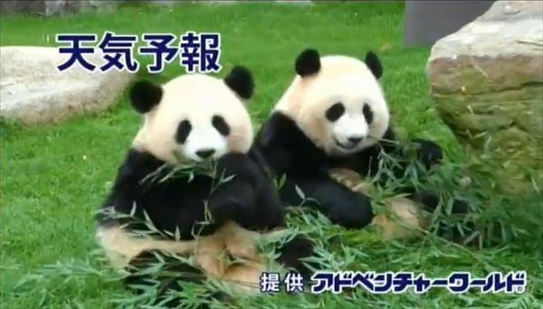 R-指定 アドベンチャーワールドのパンダとCMを語る