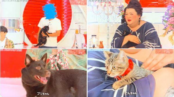 星野源 マツコ・デラックスと「タイピー日記」猫のふれあいを語る