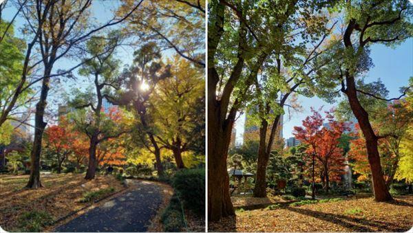 安住紳一郎 日比谷公園の紅葉と松本楼のSince発見を語る