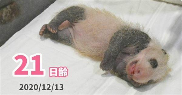 安住紳一郎 2020年和歌山パンダの赤ちゃん誕生と名前予想の予定を語る