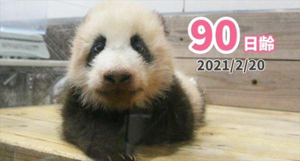 安住紳一郎 2021年和歌山パンダ赤ちゃんの名前を予想する