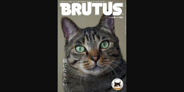 ハライチ岩井 雑誌BRUTUSの猫ちゃんニュース取材を語る